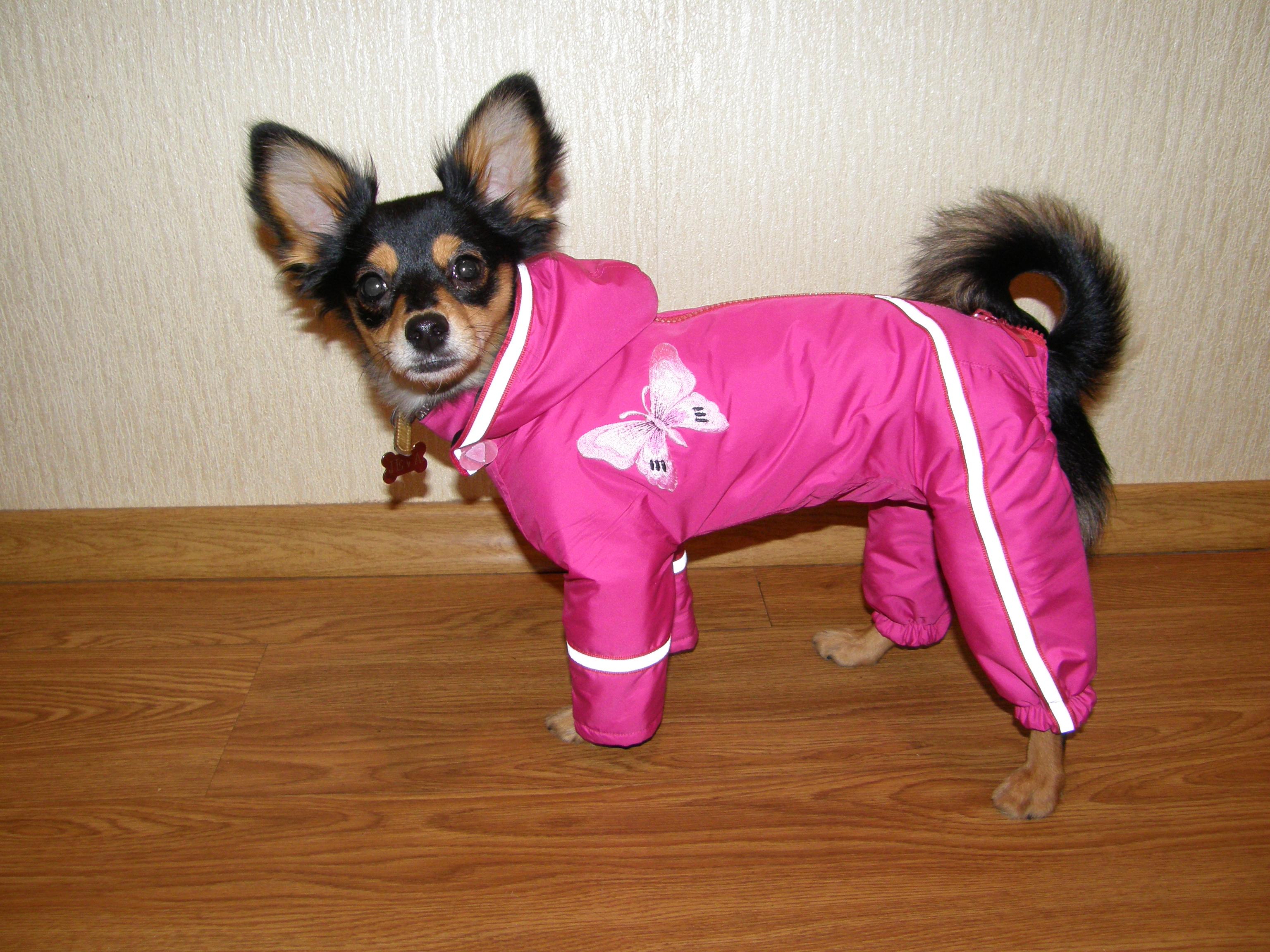 Одежда для собак мелкой породы своими руками