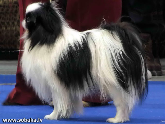 На выставке «Евразия-2007». 