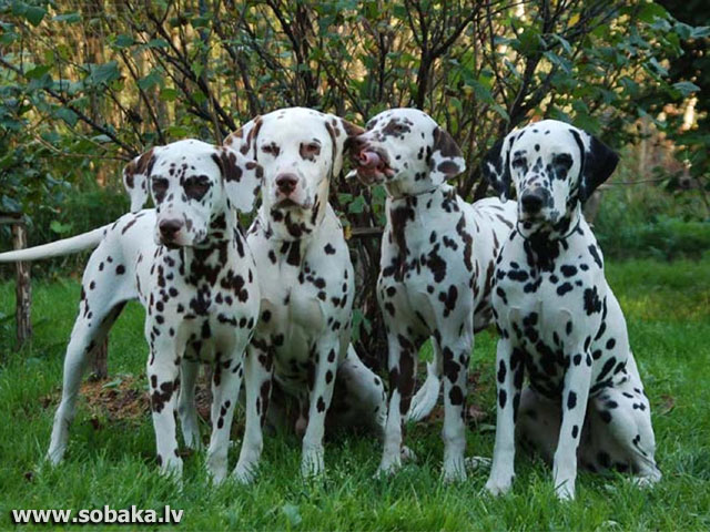 С дочерьми. 