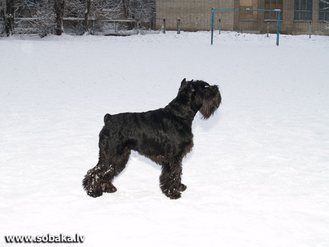 Митя. 