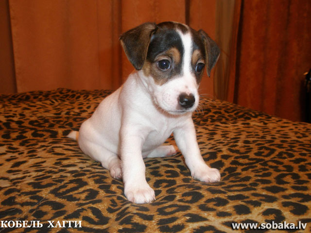Малыш. 