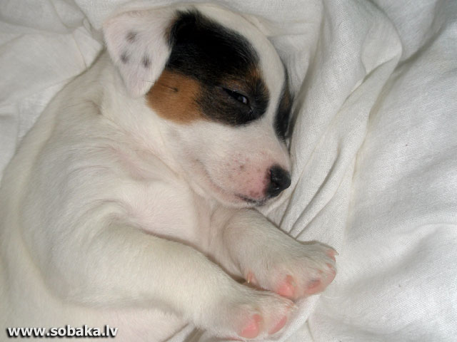 Малышка. 