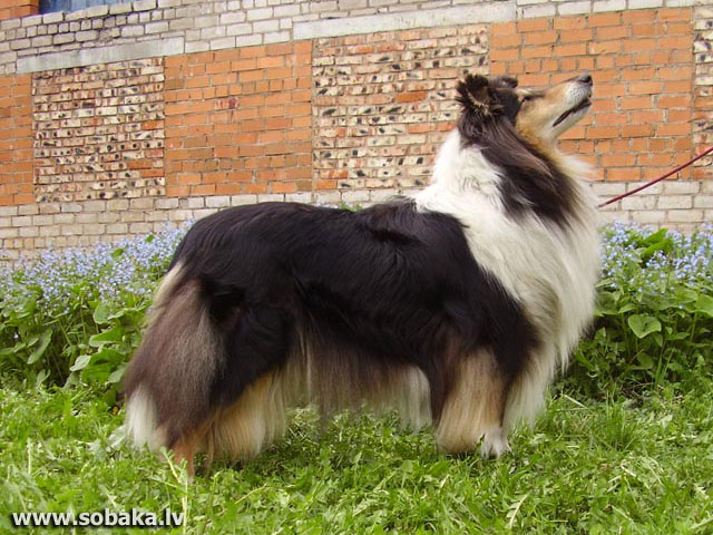 Eldvidzh Yancy Black Rose. 