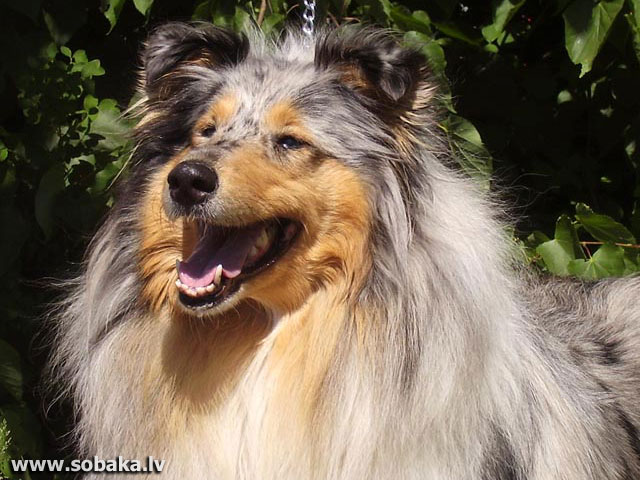 Eldvidzh By All For You. 