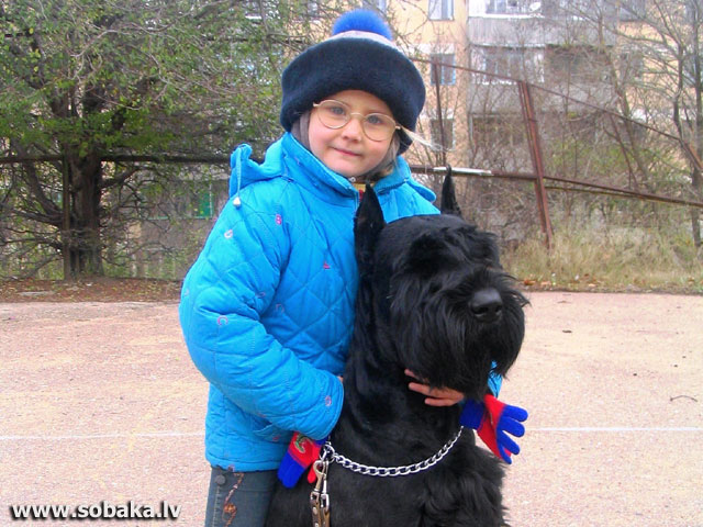 Любимец. 