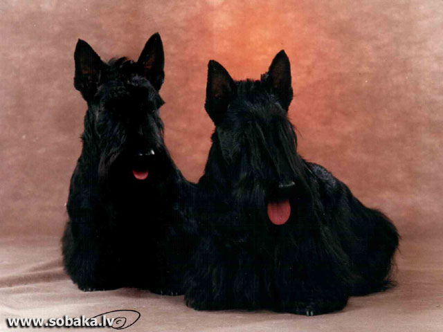 М.Б. Мата Хари и Долли ле Росс. 