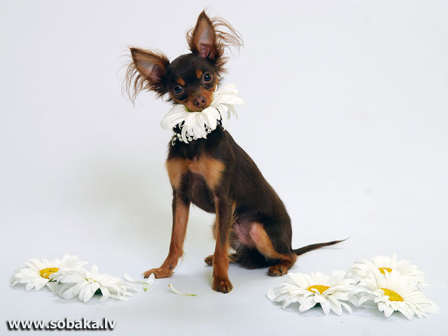В ромашках. 
