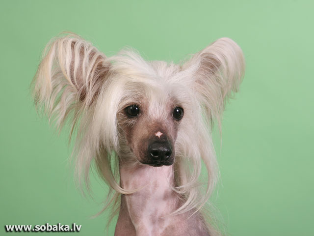С выставки. 