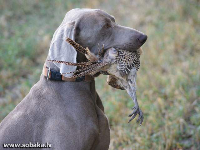 На охоте. 