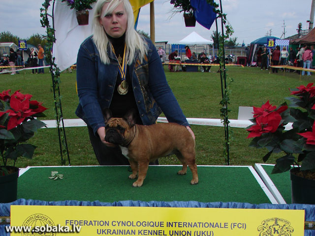 French Bulldog Dog Kennel Malenkiy Bes Photos Page 1 On Eng