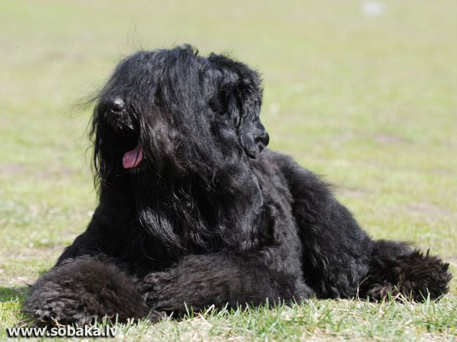 Русалочка на Знаменских. 
