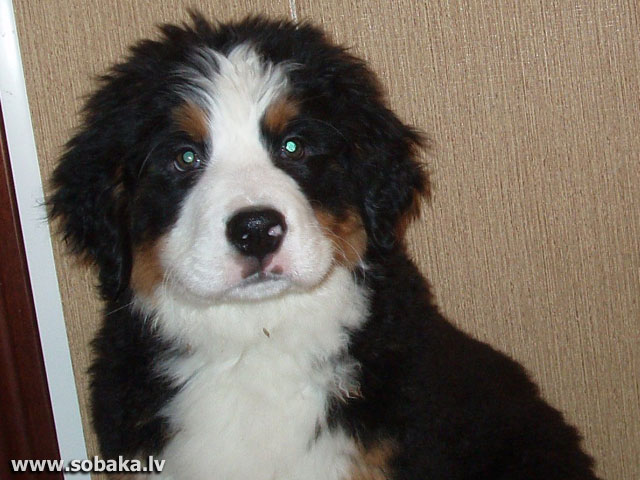 Красота. 