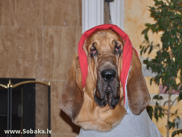 Гламурный блад. 