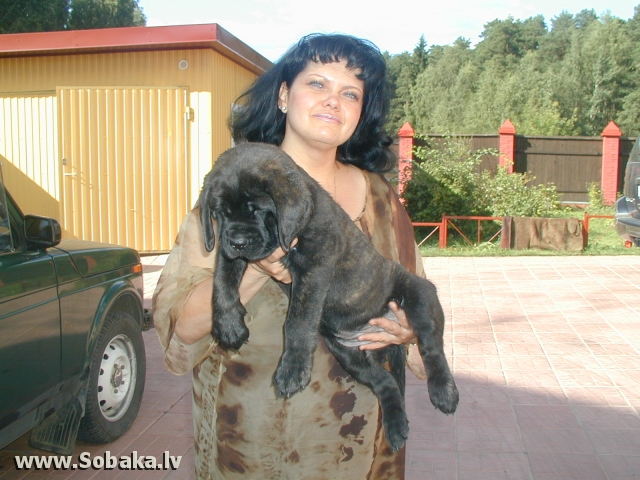сын билла. 