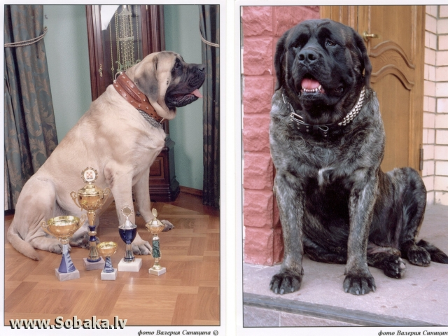 англичане. 