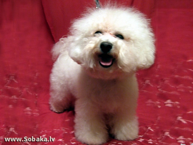 Марибель. 