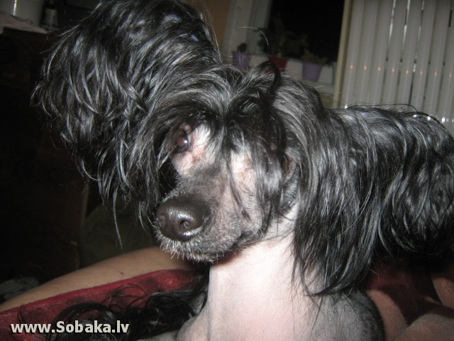 без прикрас. 