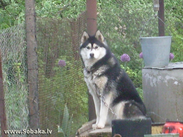 Красавица. 