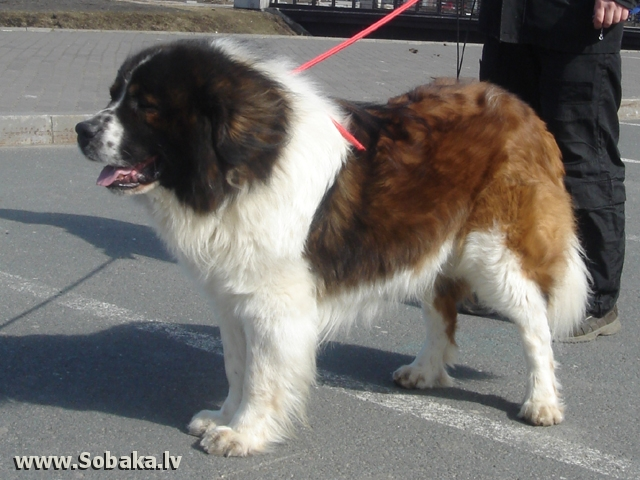 Moscow Watchdog 
