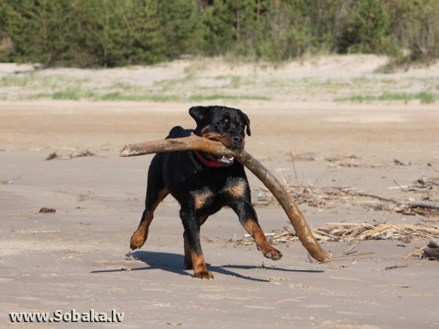 На море. 
