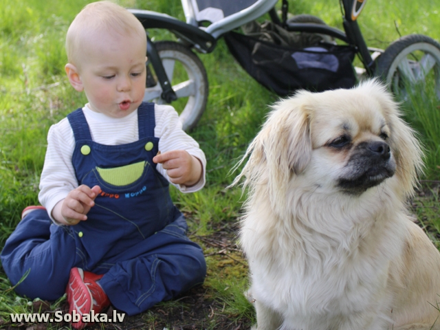 щеночки. 