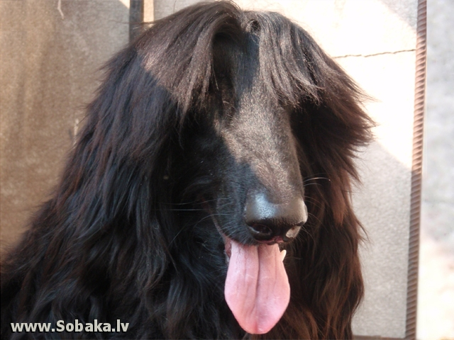 Банан. 