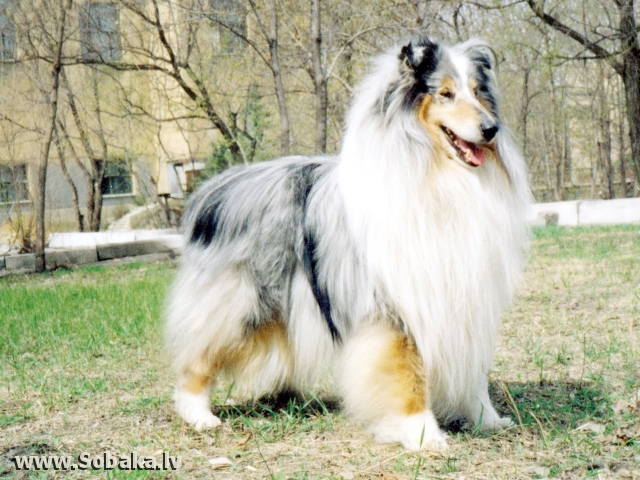 Ч.России Викани Данс Тру Зе Мист. 