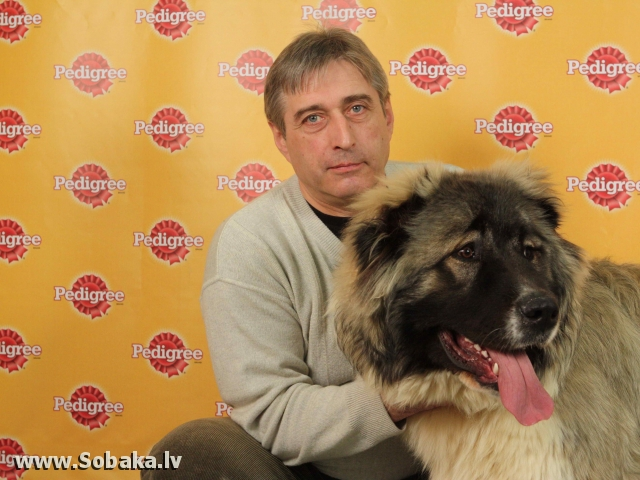Caucasian Shepherd Dog 