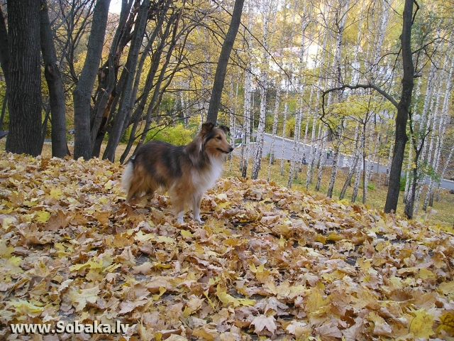 Осенняя прогулка. 