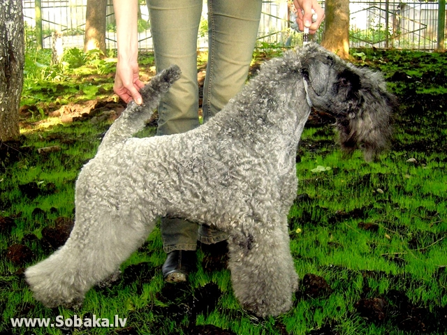 Ерена на болотной травке). 