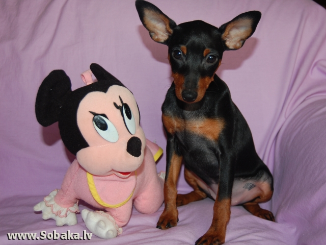 Звезда Зарина. 