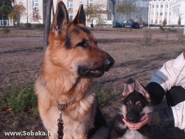 Айк и сынок - Гектор (Гросс) - 1,5 месяца. 
