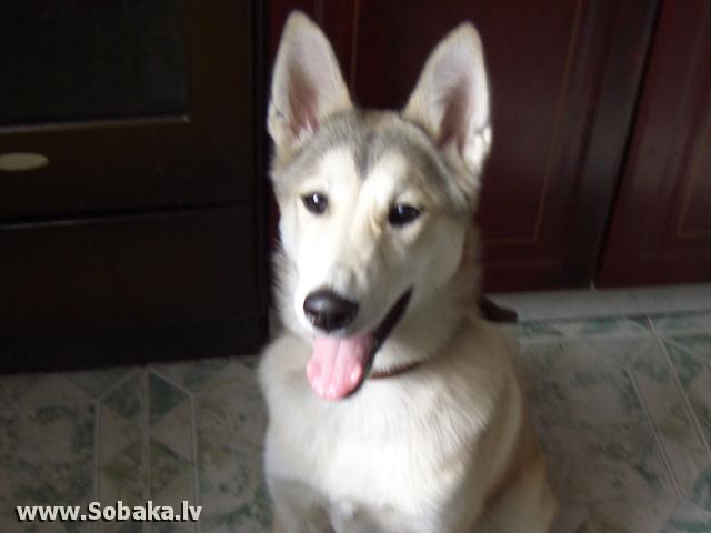 klichka-dlya-suchki-layki