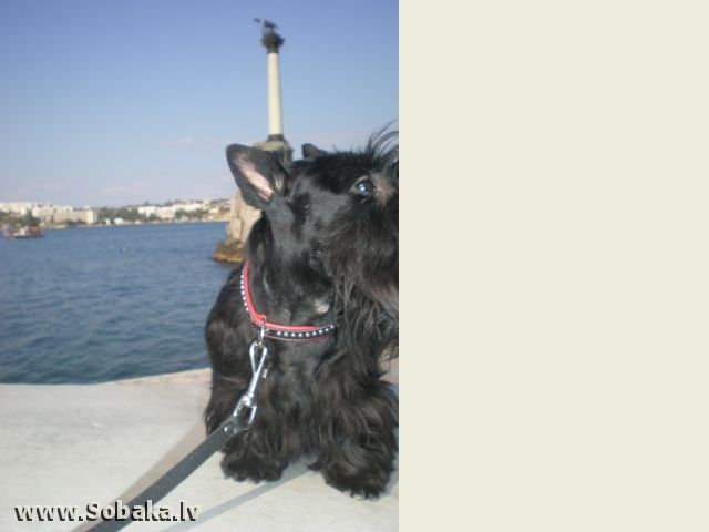 Прогулка. 