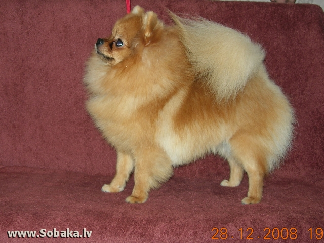 Сибс. 