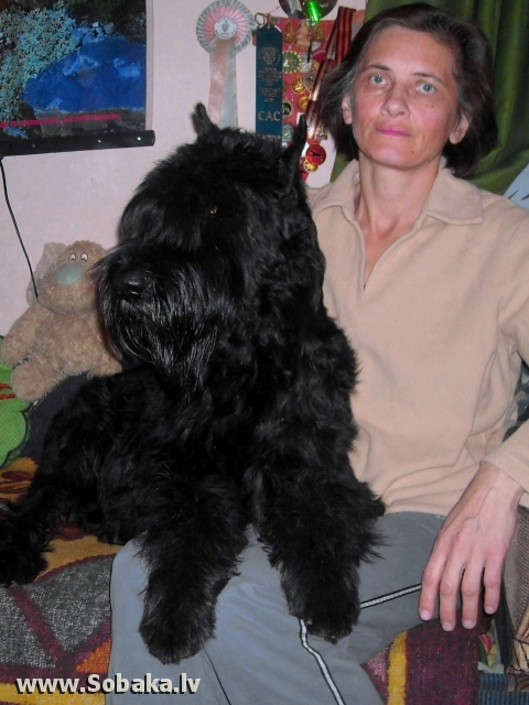 Giant Schnauzer Roman-Kosh Venecia Dark Night