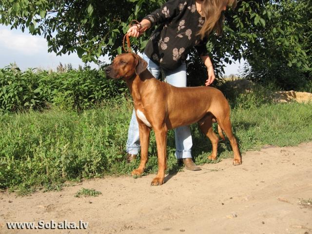 Локи(Лайн Шабо). 