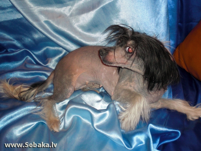 Наш врачеватель. 