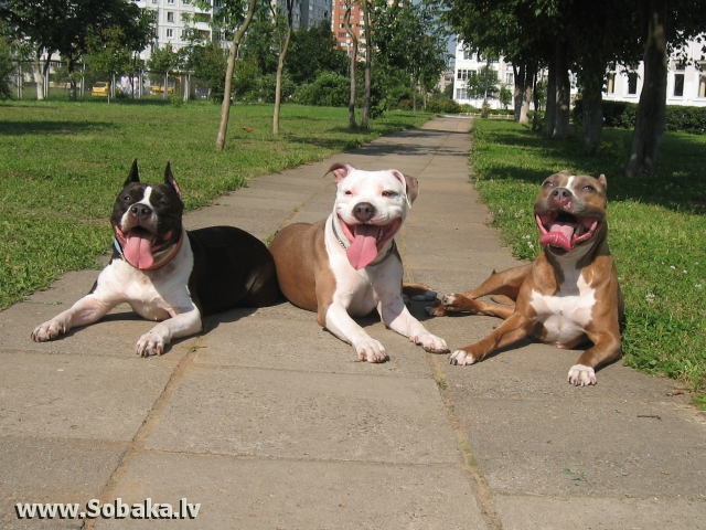 Мои девочки. 