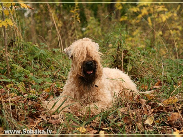 На ковре из желтых листьев.... 