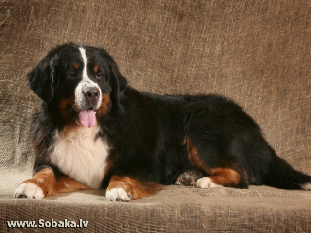 Портрет. 