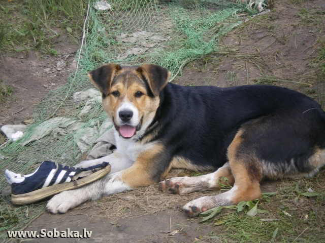 Mongrel