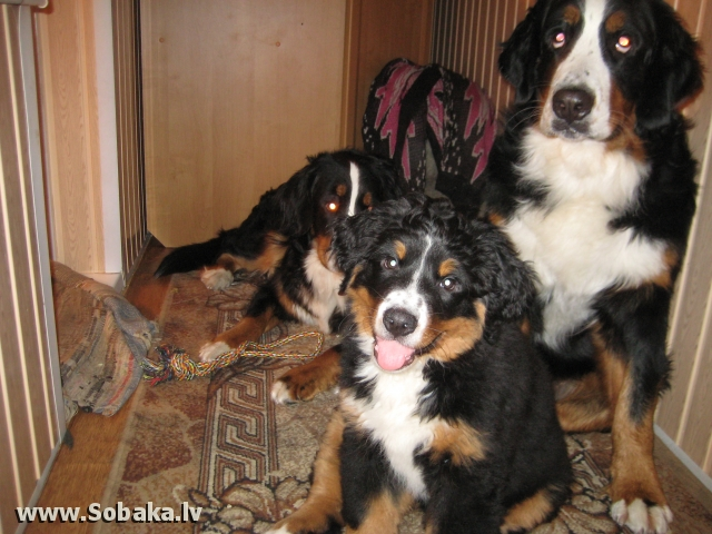 Дочка Дианы. 