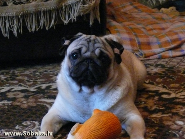 Крош Енот. 
