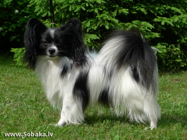 Питомник Status Forte. 
