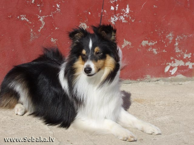 Винтик на солнышке. 