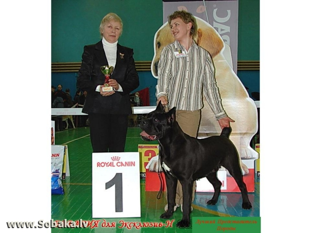 Лучший представитель породы. 