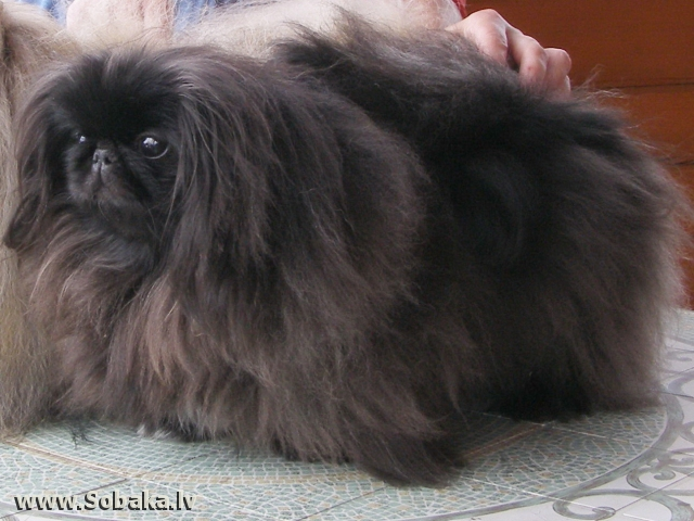 Рукавная девочка. 