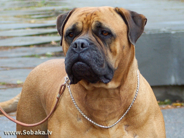 AYRIS. 