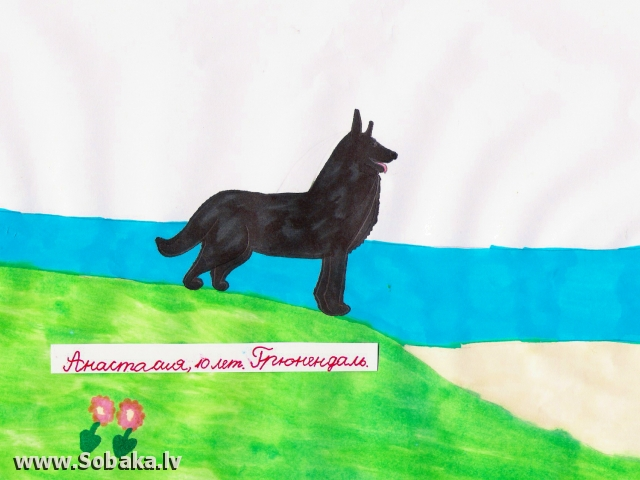 Belgian Shepherd Dog Groenendael 